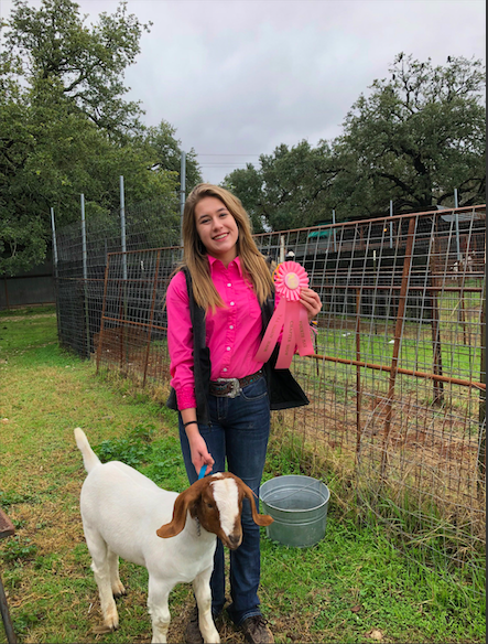 Recently at the FFA Winterfest, FFA secretary Hannah Shepard, won 4th place for the goat showmanship at the 2018 Bowie Austin FFA Winterfest.