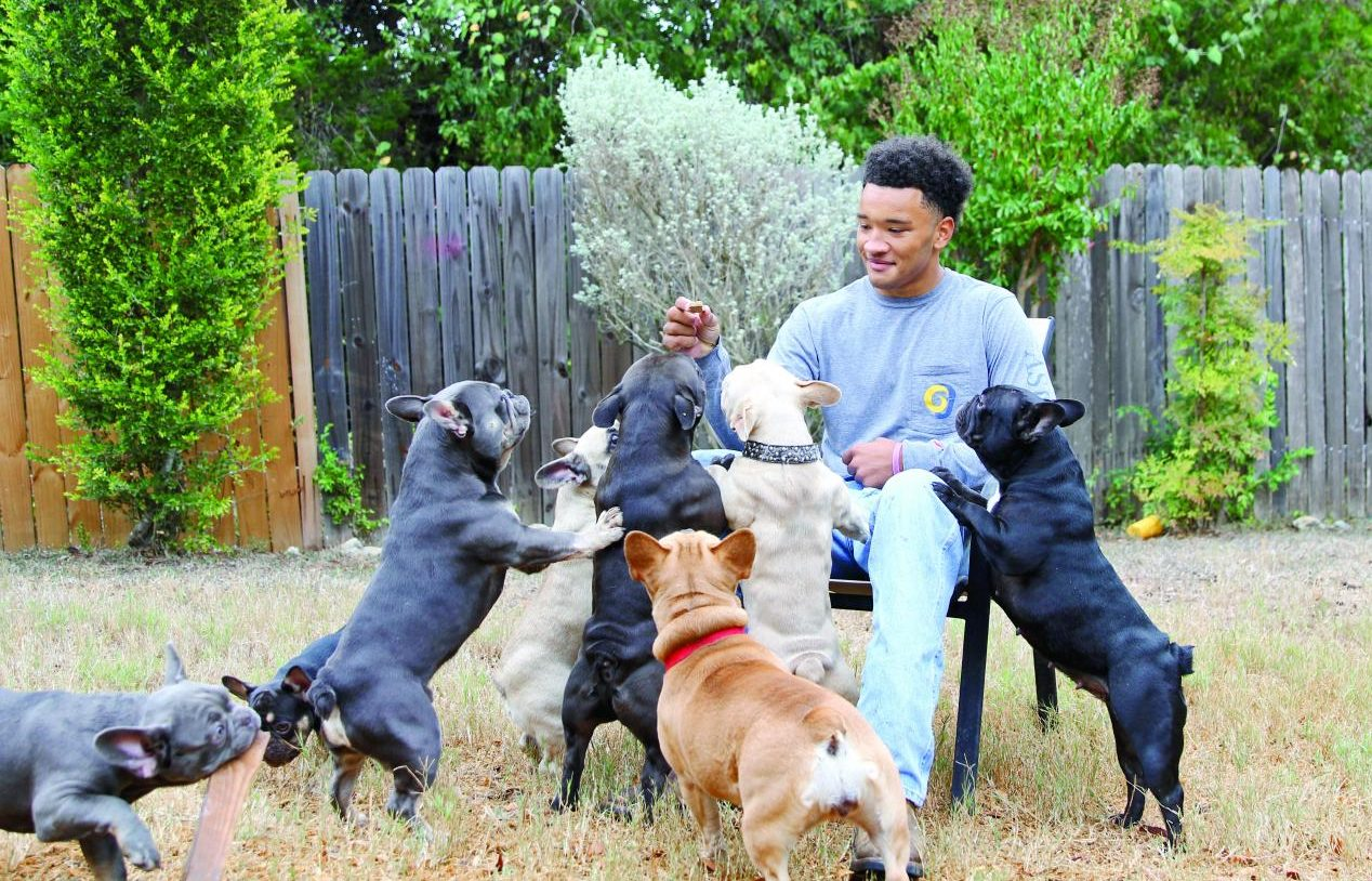 HOLDING A TREAT: Senior Trinadad Sanders is surrounded by his eight French Bulldogs. Sanders has been breeding multiple types of bulldogs such as Brindle and Moreau Bulldogs.
