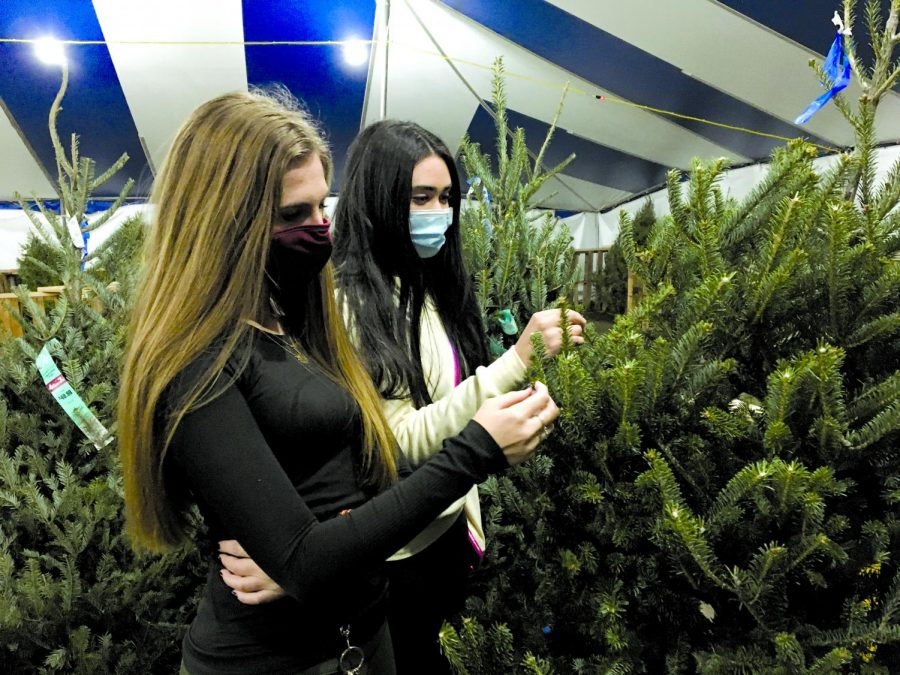 PICKING THE PERFECT CHRISTMAS TREE: Seniors Iliana Rivera and Sidney Tishgart look at Christmas trees from Papa Noel's Christmas tree farm, and try to pick out the perfect one to take home. Papa Noel's Christmas tree farm has several different Austin area locations, each with a variety of different trees to choose from.